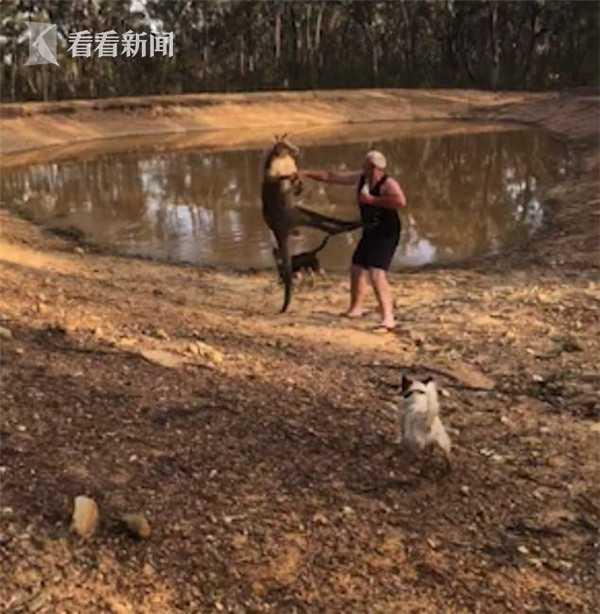 澳洲袋鼠脾气大谁都惹 飞起一脚就将健硕男子踢倒在地